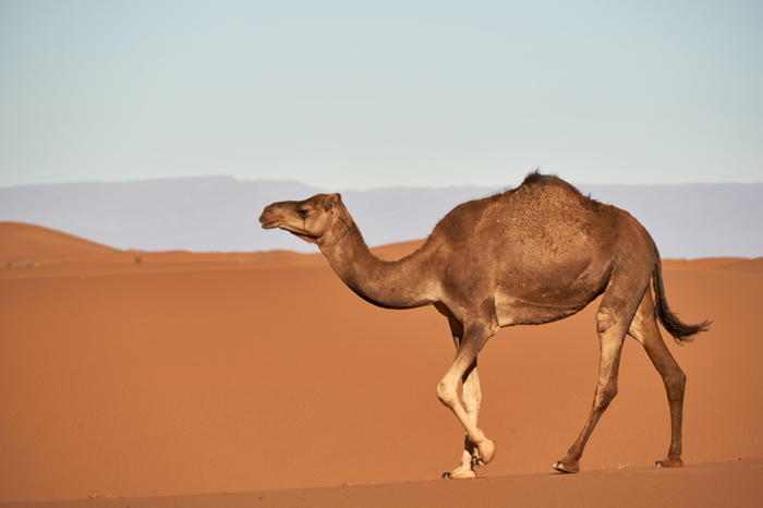 Use CamelCase to make your social media accessible
